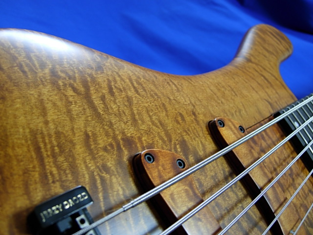#313 Excellency 5 Flame Maple